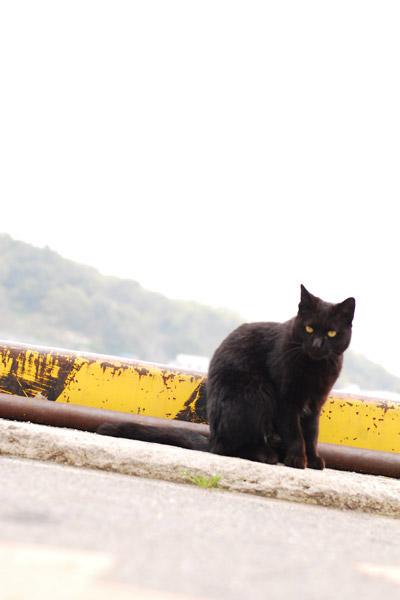 a lovely black cat