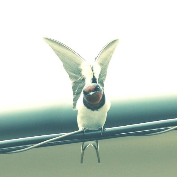 fly! fusao!